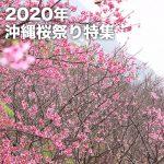 2020年沖縄桜祭り特集