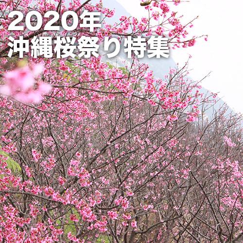 沖縄桜祭り特集(2020年)